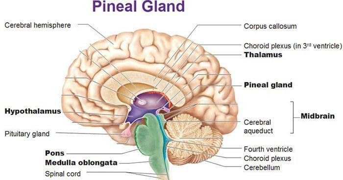 How to Detox your Pineal Gland Effectively?