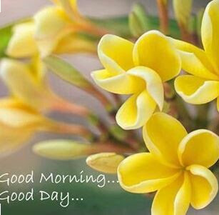 100 Best Gd Mrng Images The Biggest Collection Of Good Moring Images
