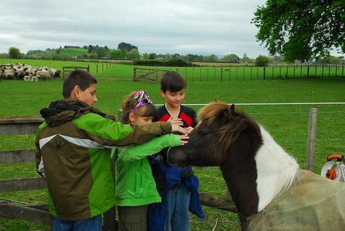 Sam_farm_NZ 017