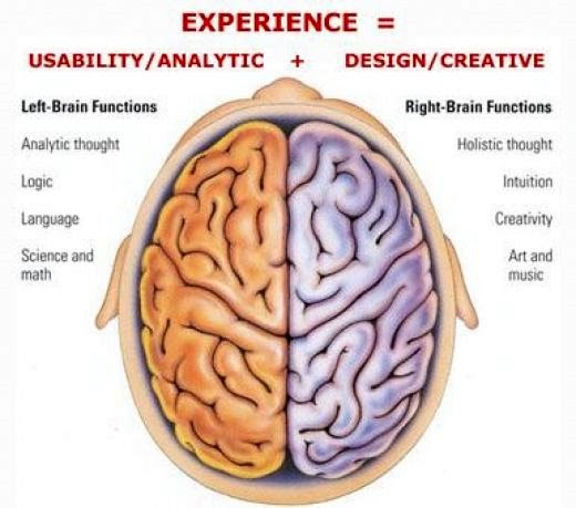 Brain Anatomy Game - Anatomy Drawing Diagram