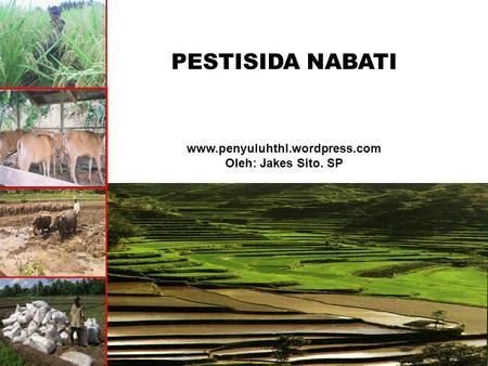 PESTISIDA NABATI www.penyuluhthl.wordpress.com Oleh: Jakes Sito. SP.