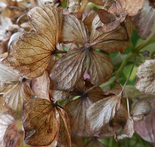 todayflowersDSCN2152b