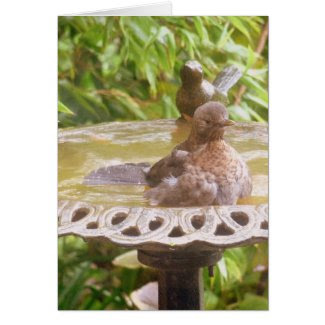 A Bird In The Bath Greeting Card
