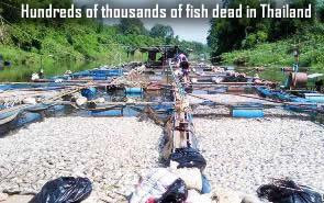 Fish dead in Thailand
