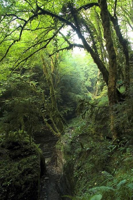 Абхазия: непроходимый рай