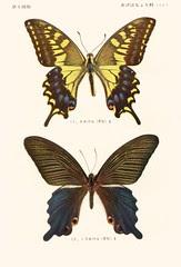papill 5