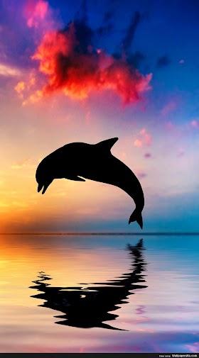 Best Dolphin Iphone Wallpaper