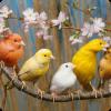 Какие птицы помогали шахтёрам?
