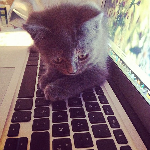 she's a Mac cat.