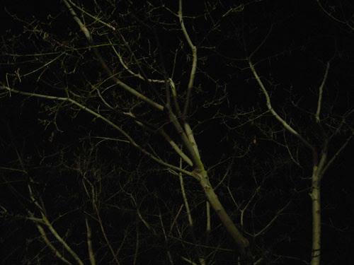 Trees at Night _ 9263