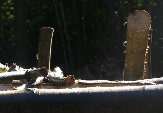 DSC_7070 steaming logs