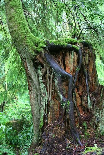 tree stacking