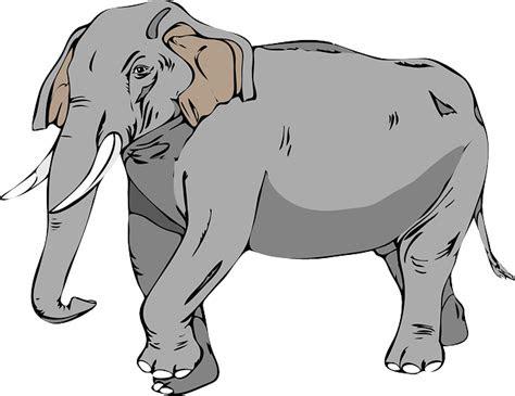gambar vektor gratis gajah besar hewan gambar gratis