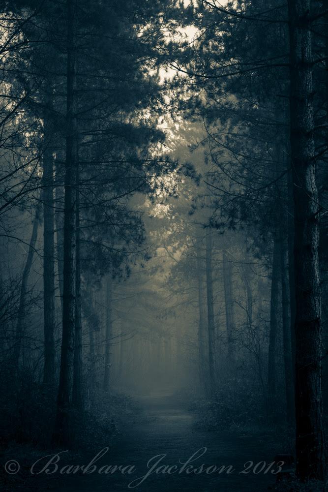 Misty path 5