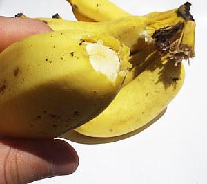 http://www.usabilidoido.com.br/imagens/banana_solta.jpg