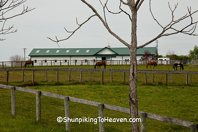 Horse Farm, Bourbon County, Kentucky