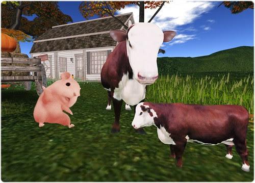 Day 143 - Hi cows!