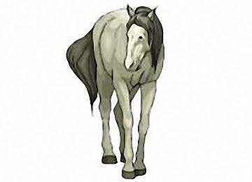 Pferde Ausmalbilder Kostenlos Drucken
