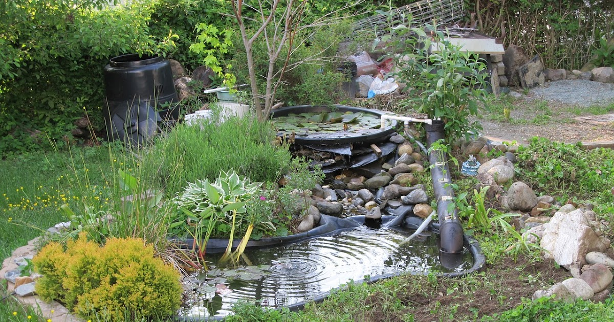 45+ Backyard Trout Farm Pictures - HomeLooker