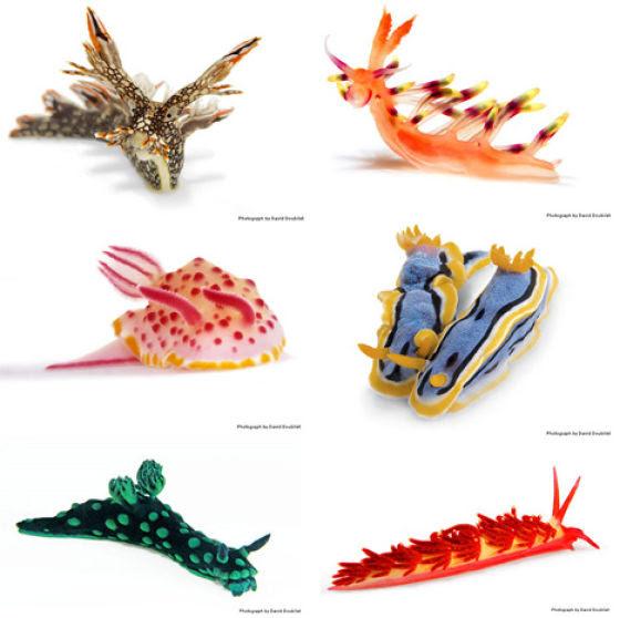 Amazing Sea Slugs (31 pics)