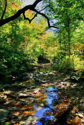 The Joy of Fall