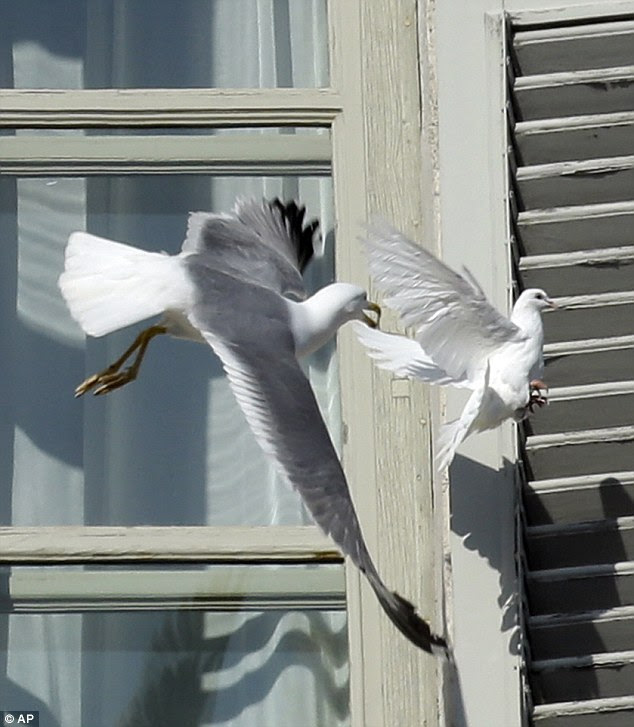 The poetic moment takes a turn for the worse as the seagull swoops upon the unsuspecting dove