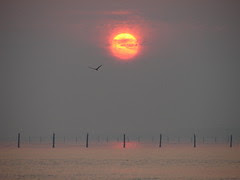 Sunrise over the Pound Nets, Chesapeake Bay_6-7-08