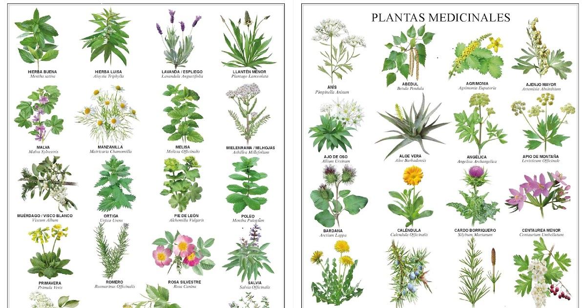 Common Yoruba Herbs: Their English Names & What They Are