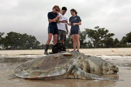 Dead turtle.JPG