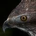 Eye of Eagle.