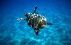 tartarughina marina.jpg
