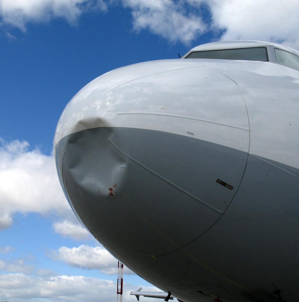 Ось як виглядає зіткнення з птахами з місця пілота і зовні