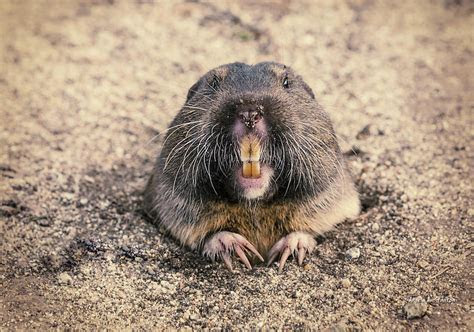 Thurston County invents a $42,000 Gopher Tax for New Homeowners   We the Governed