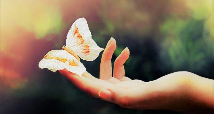 El Secreto No Es Correr Detrás De Las Mariposas Frases