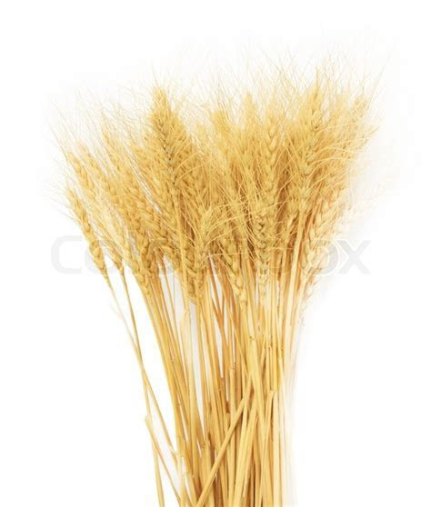 Wheat grass isolated over white background   Stock Photo