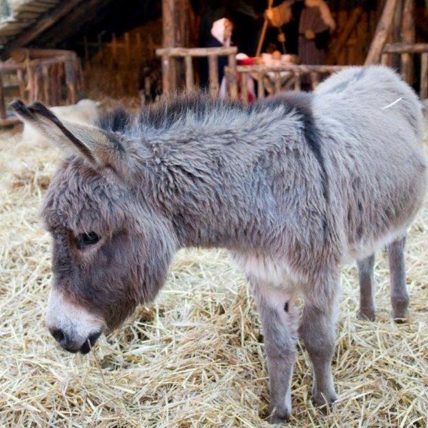 Donkey standing on straw