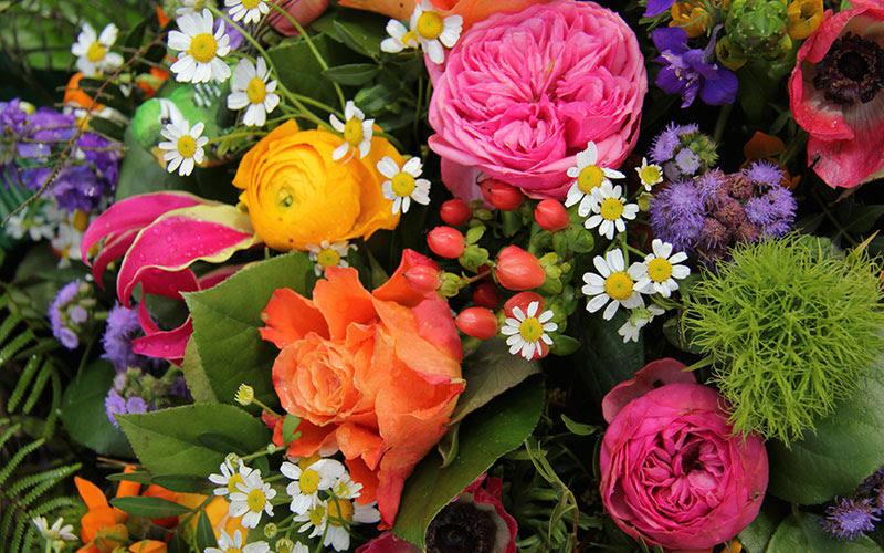 Bildergebnis für flowers
