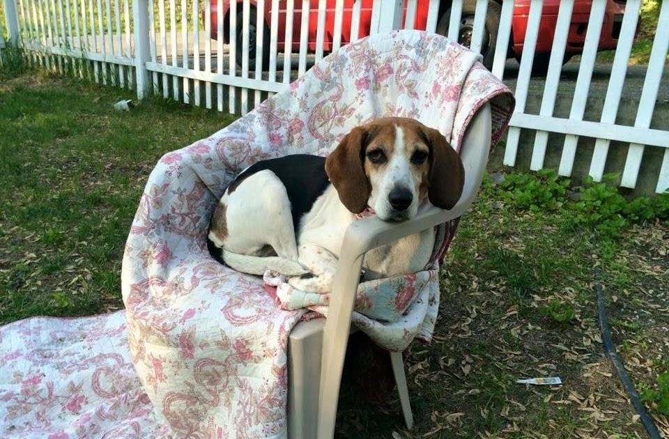 Craigslist Lost And Found Pets Wilmington Nc - Craigslis Jobs