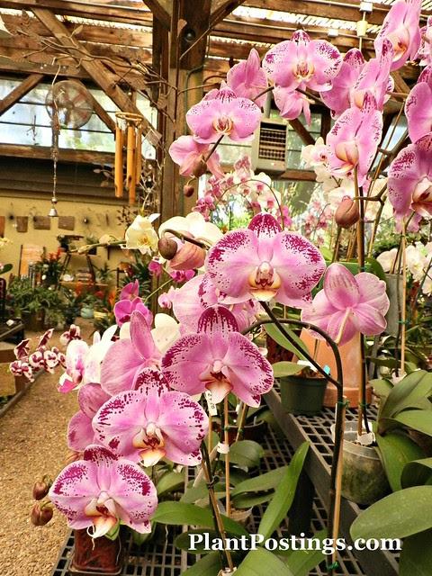 orchid shop