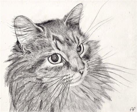 cat pencil drawing  mintimelon  deviantart