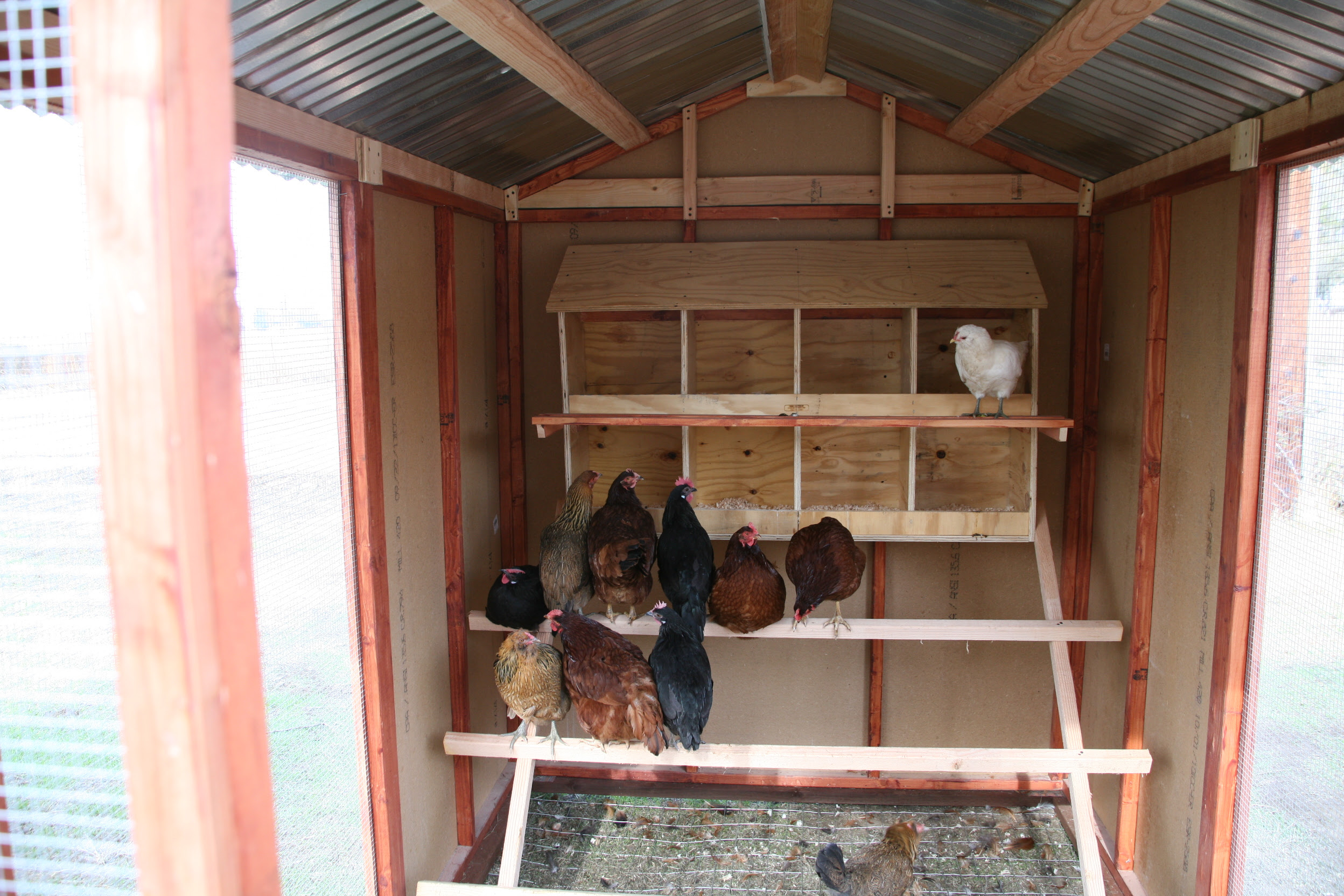 Coop guide: Most Used Inside of chicken coop designs