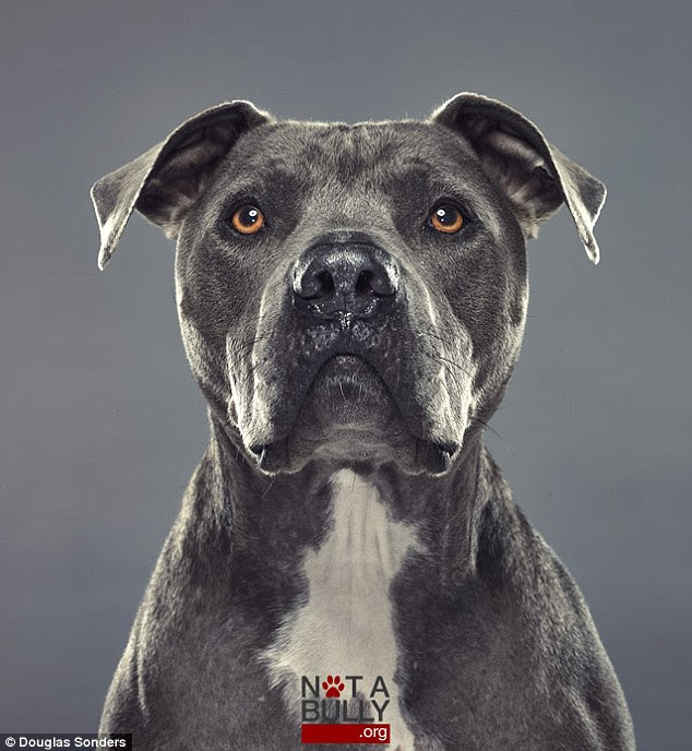 Noble: Pit bulls are often referred to as 'bully-breeds' - assumed to be mean, aggressive and dangerous, but many proud owners know them to entirely the opposite