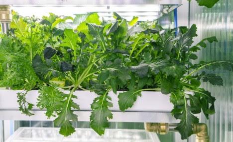 indoor farm vertical garden