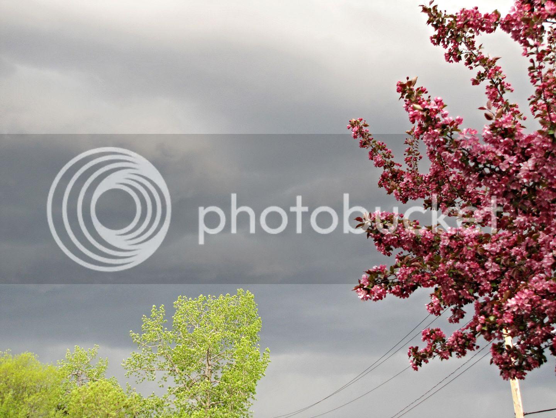 photo 97f45959-7013-4765-880a-03f8e33701e9.jpg