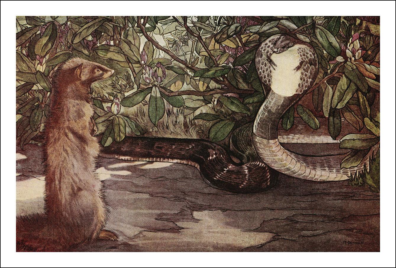Edward Julius & Maurice Detmold, The jungle book