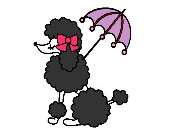Dibujo De Caniche Con Sombrilla Pintado Por Ruben9 En Dibujosnet El