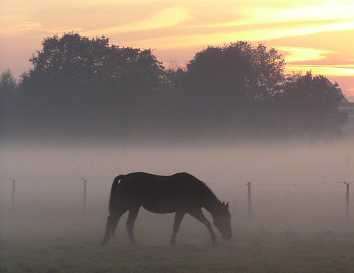 haze with horse by e³°°°, on Flickr