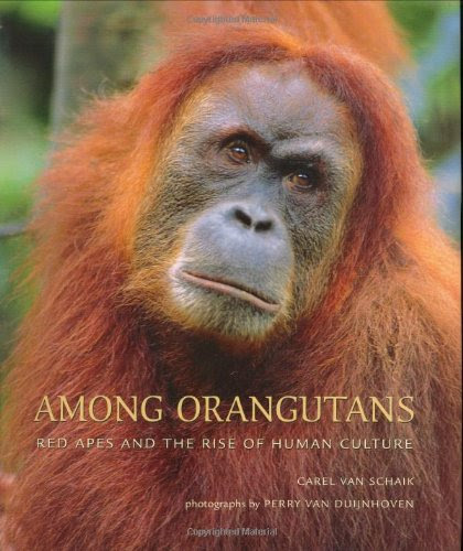 Among Orangutans Red Apes And The Rise Of Human Culture