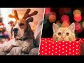 How To: Keep Pets Away from Holiday Decor & Other Hazards