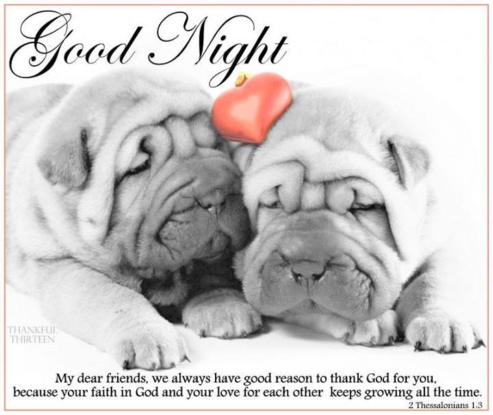 Good Night Quote With Cute Puppies Pictures Photos And Images For
